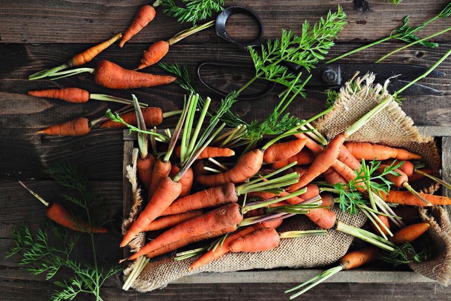 Применение органического удобрения в процессе выращивания моркови