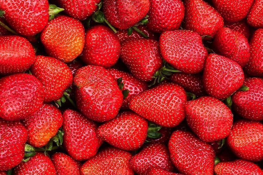 Багато червоної полуниці